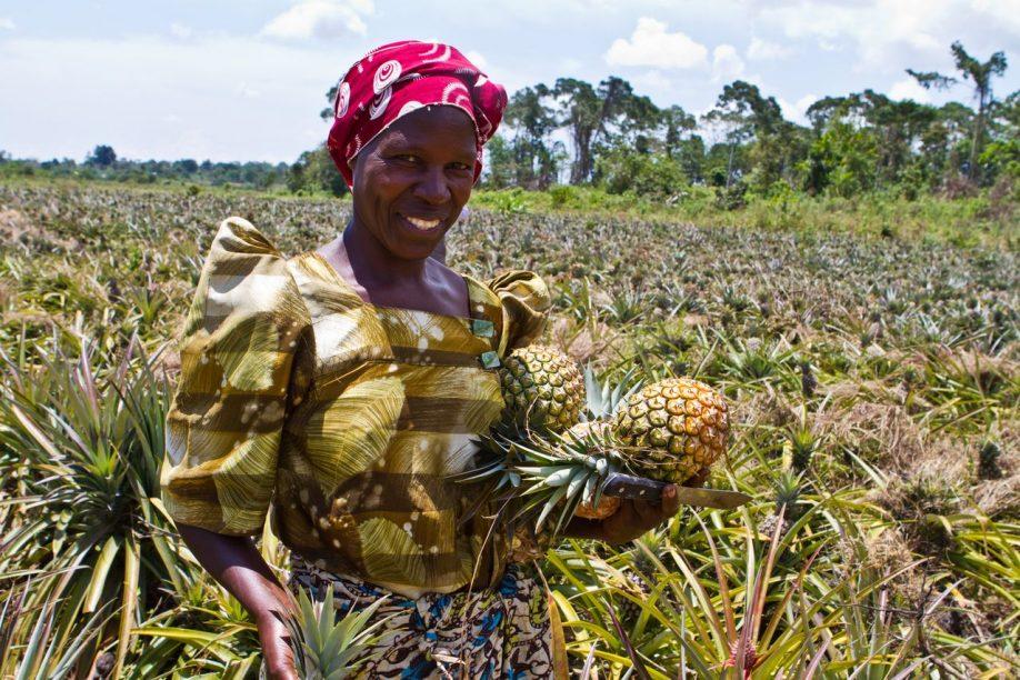 Madina-pineapple
